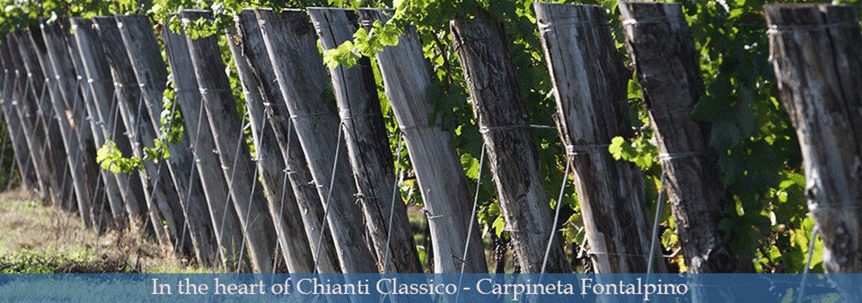 In the heart of Chianti Classico - Carpineta Fontalpino