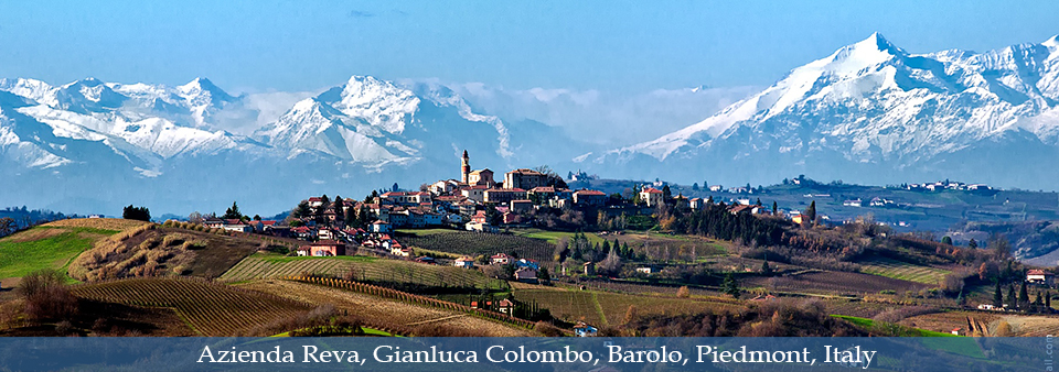 The rising star of Barolo - Azienda Reva