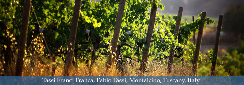 Amazing modern style Brunello - Tassi Franci Franca